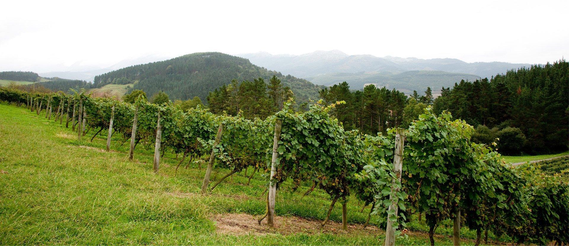 <h1>Winery</h1>